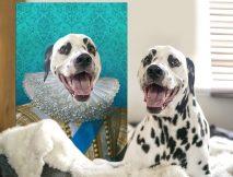 King of France Pet Aristocracy Portrait Art